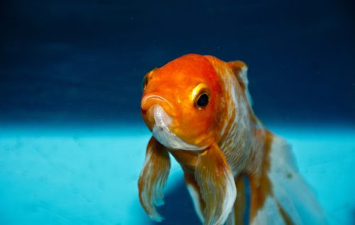 Our attention span is shorter than that of a gold fish