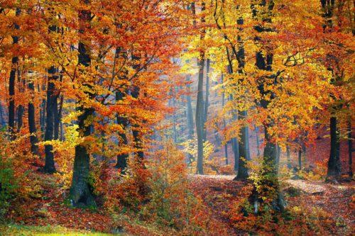 Autumn mindscape