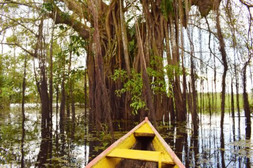 Waters of the Amazon